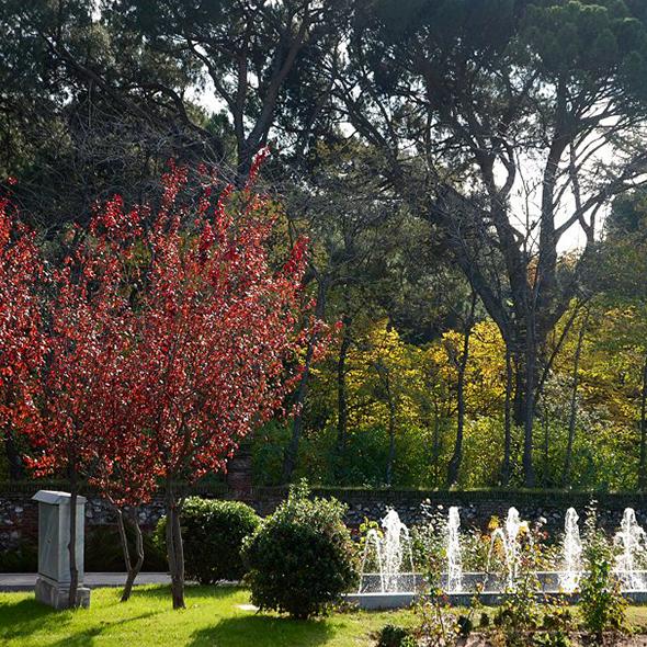 A exuberante vegetação é característica do clima da região, formando um cenário único em Madrid. Foto via Wikimedia Commons
